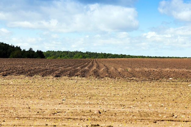 Agricultural field that was plowed furrows for planting potatoes.
