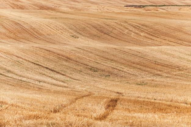 Сельскохозяйственное поле, где собирали спелую желтую рожь