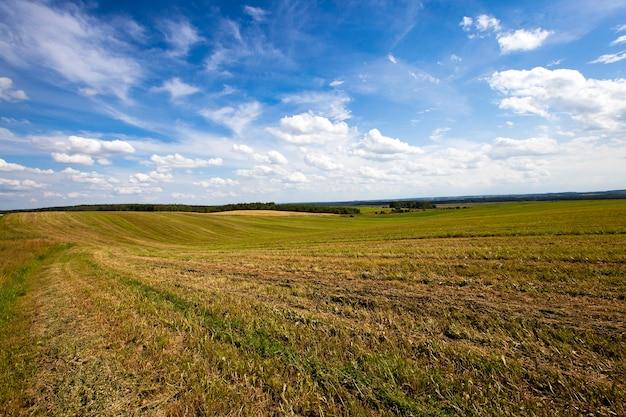 緑の未熟粒を育てる農地