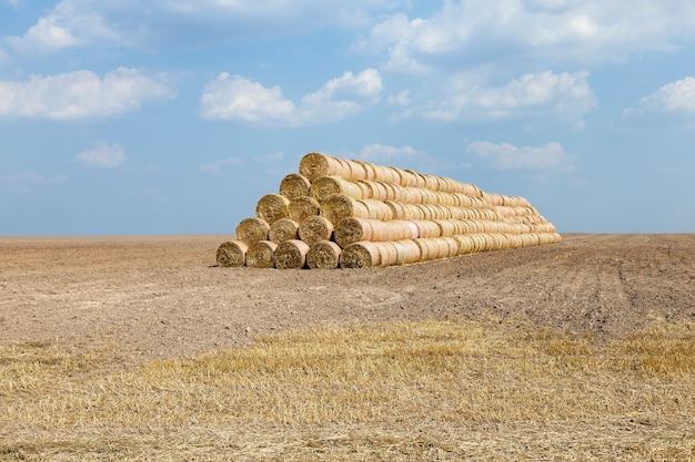 Сельскохозяйственное поле, на котором проводится уборка зерновых