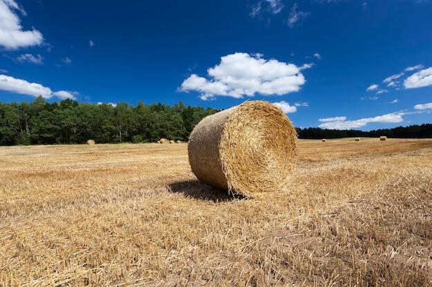 Сельскохозяйственное поле, где пшеничная солома собирается в штабеля для использования в фермерских хозяйствах и сельскохозяйственных предприятиях