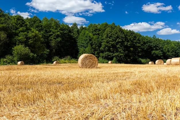 麦わらが積み重なって集まる農地