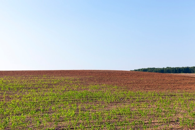 Agricultural field on which the crop of the products necessary for a food of people or animals grows