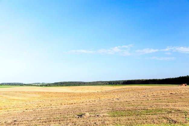 Сельскохозяйственное поле, на котором производится уборка зерновых, пшеницы. на поле осталась неиспользованная солома. на заднем плане голубое небо. фото пейзажи
