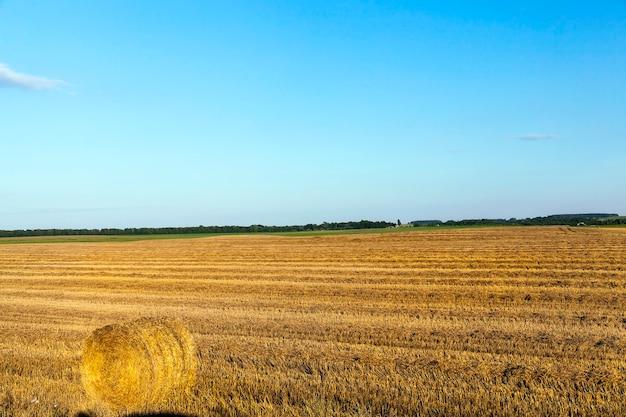 穀物、小麦の収穫を行った農地。畑には未使用のわらが残っていました。