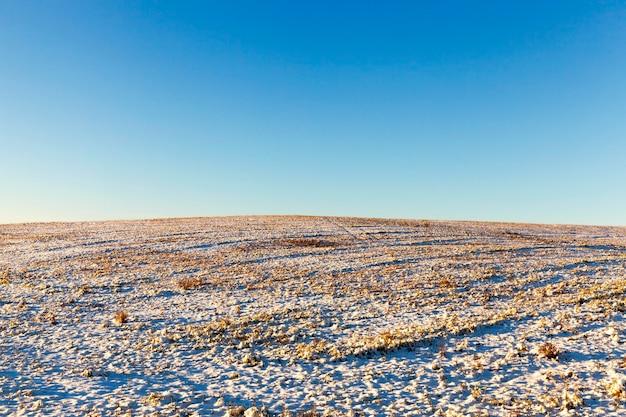 눈, 겨울 풍경으로 덮여 목장 동물을위한 마른 잔디와 농업 분야