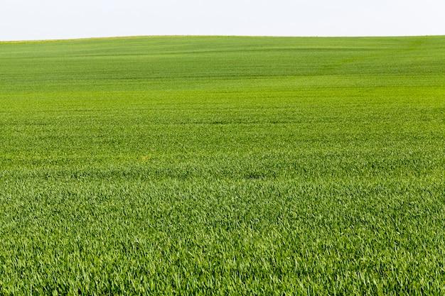 후속 잔디 깎기, 건조 및 농장에서 동물에게 먹이를주기위한 겨울 건초 준비를위한 푸른 잔디와 식물이있는 농업 분야 프리미엄 사진