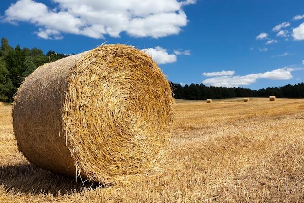 Сельскохозяйственное поле со стогами сена после сбора урожая пшеницы