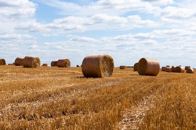 ライ麦わらの山がある農地