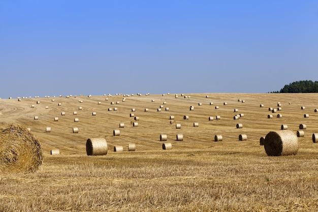 小麦や大麦、ライ麦の収穫後に残った藁の山がある農地、夏の間、山はしっかりと巻かれています