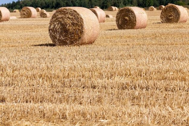 짚 더미가 있는 농업 분야