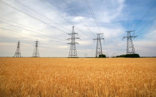 Сельскохозяйственное поле с пшеницей и линиями электропередач