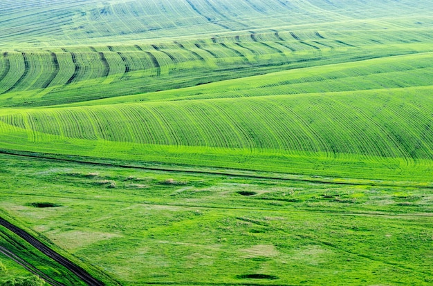 Agricultural fields in the spring. view from above