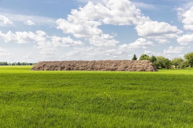 곡물 및 식량 생산을위한 곡물 제품 측면의 농지