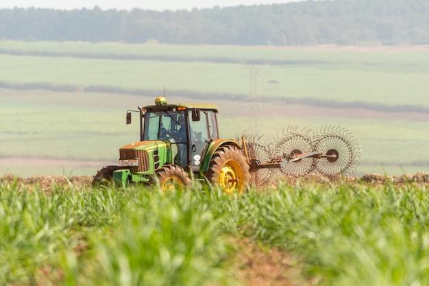 サトウキビが植えられた農機具施肥地