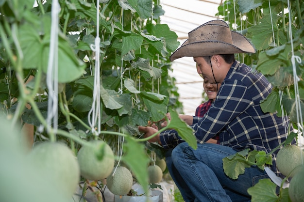 Agricultural researcher with the tablet slowly inspect plants.