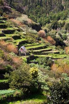 ポルトガルのマデイラ島の農業用テラス