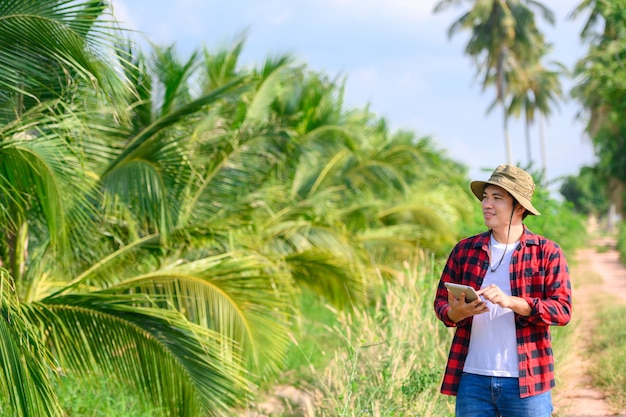 Agricultural work in coconut plantation using tablets check the quality of the coconut tree..