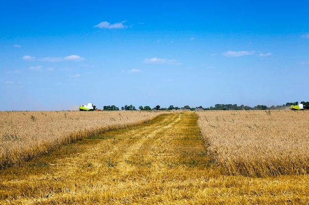 農業-穀物の収穫を行った農業分野。夏。