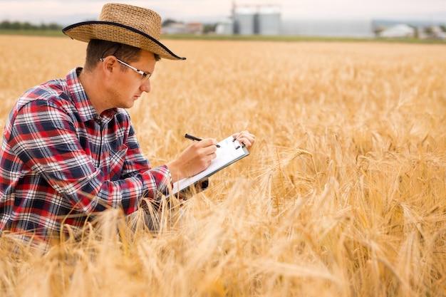Концепция сельского хозяйства и сбора урожая. ростки пшеницы в руке фермера. агроном пишет на документе план развития пшеницы.