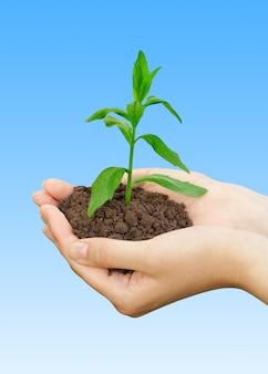 農業の概念。青の上に手で植える