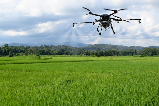 Agriculture drone farming fly to spray fertilizer on the rice fields. industrial agriculture and smart farming drone technology.