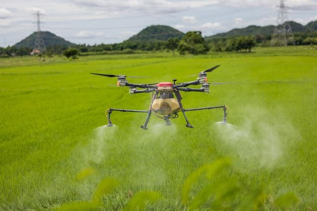 농업용 드론이 논 위를 활공하며 비료를 뿌립니다. 농부들은 논에 비료를 뿌리기 위해 드론을 사용했습니다. 농업 기술 개념