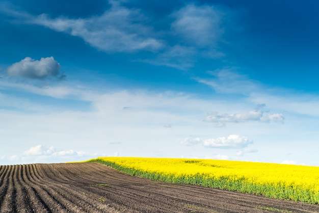 여름에 농업 분야