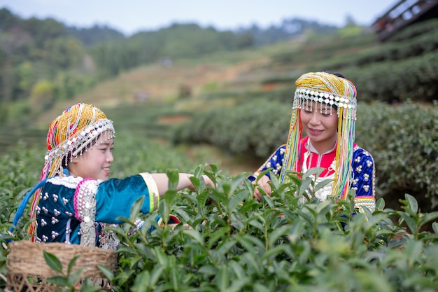 Agriculture of hilltribe women