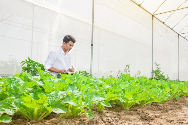 Agriculture industrial of farming checking plants