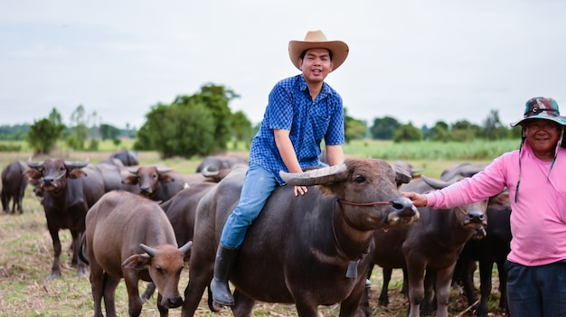 Agriculture industry, farming, husbandry concept - young man takes care of thai buffalo