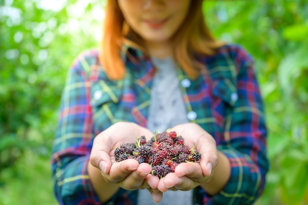Agriculture is harvesting fresh mulberry in mulberry plantations to extract mulberry juice or jam and is high in vitamins. Premium Photo