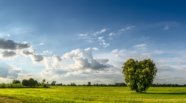Agriculture land and grassland with heart shape tree in rural scene on blue sky background