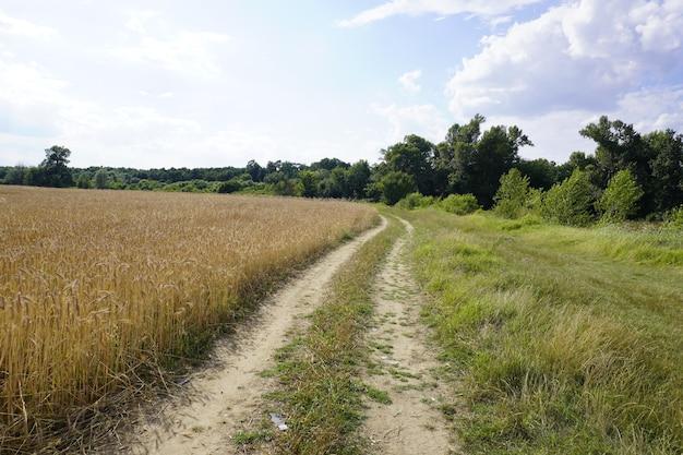 Agriculture landscape field ripe wheat shining sunlight car path