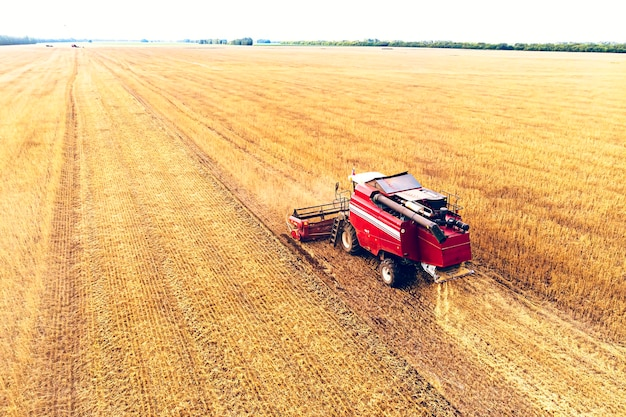Agriculture machine harvesting crop in fields. harvesting in autumn in the morning at dawn. agribusiness in the altai region russia.