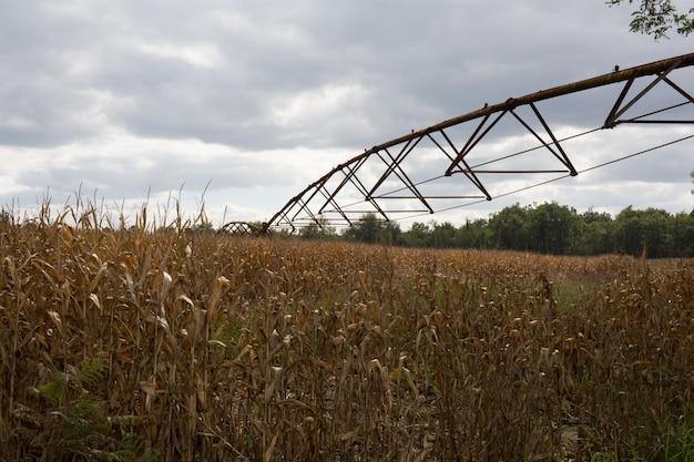 トウモロコシ畑の灌漑の秋