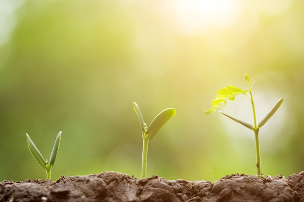 Agriculture planting seeding growing,  business growht up concept