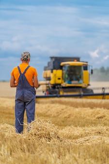 フィールドでの農業プロセス。麦畑と黄色が組み合わさっています。収穫のプロス。