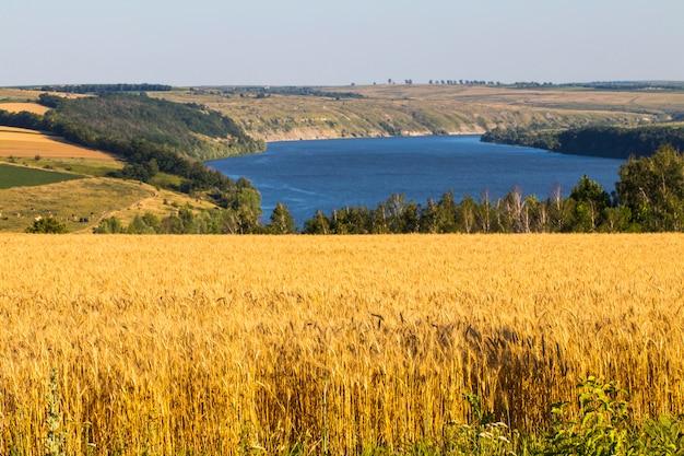 Сельское хозяйство пшеничное поле на сельском берегу реки пейзаж