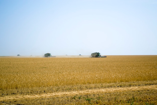 Agroindustrial industrial landscape with combine harvesters picking up hay on a rape field on a sunn...