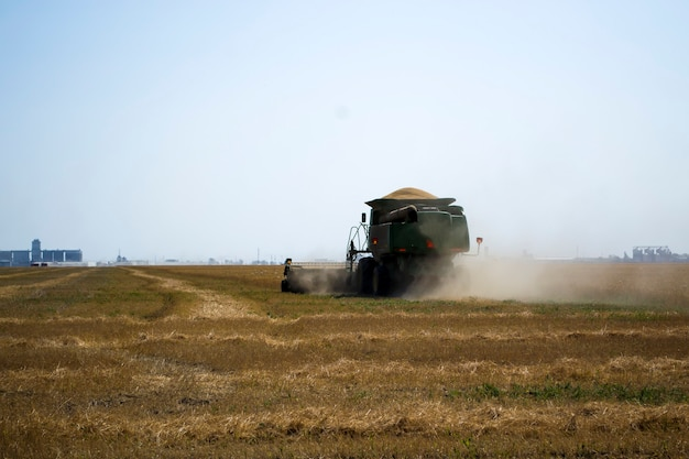 Agroindustrial industrial landscape with combine harvesters picking up hay on a rape field on a sunn