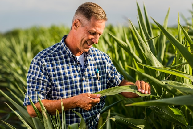 Agronomist attentively inspecting a corn leaf