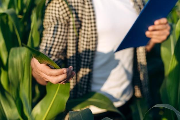 農学者はトウモロコシの葉を調べ、メモを取ります。農民は畑で働いています。市松模様のシャツを着た男性のクローズアップ。