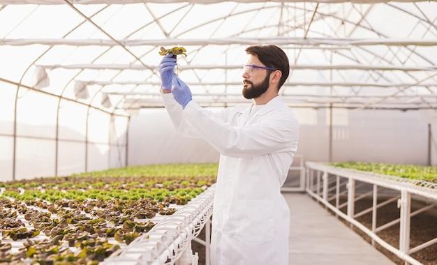 Agronomist examining plants in hydroponic glasshouse