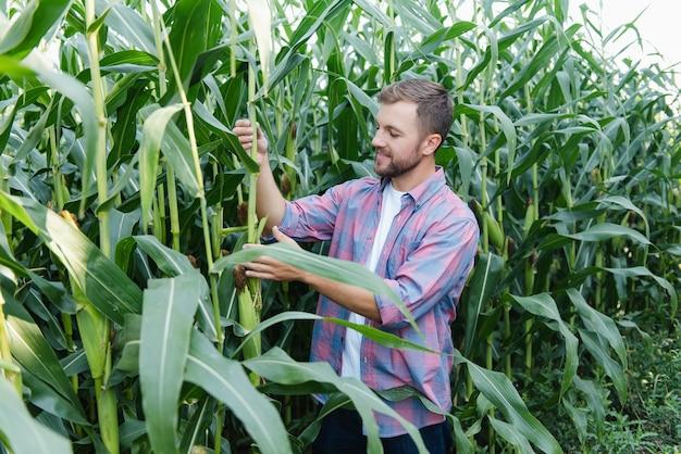 Агроном держит планшетный компьютер с сенсорной панелью в кукурузном поле и осматривает урожай перед сбором урожая. концепция агробизнеса. бразильская ферма.