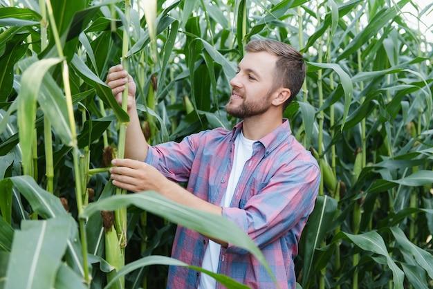농업 경제학자는 옥수수 밭에 태블릿 터치 패드 컴퓨터를 들고 수확하기 전에 작물을 검사합니다. 농업 관련 개념입니다. 브라질 농장.