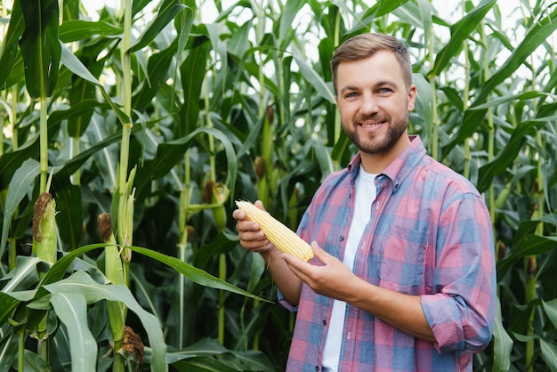 農学者は、トウモロコシ畑にタブレットタッチパッドコンピューターを持ち、収穫前に作物を調べています。アグリビジネスの概念。ブラジルの農場。