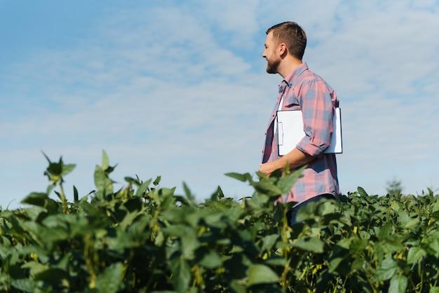 Агроном осматривает посевы сои, растущие на поле фермы. концепция производства сельского хозяйства. молодой агроном осматривает урожай сои на поле летом. фермер на соевом поле