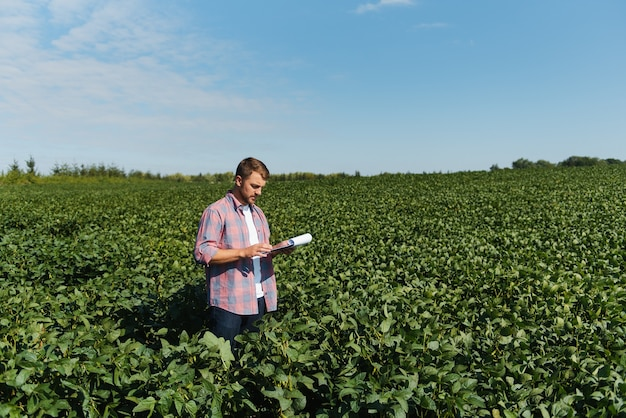 콩 밭의 작물을 조사하는 농학자 또는 농부