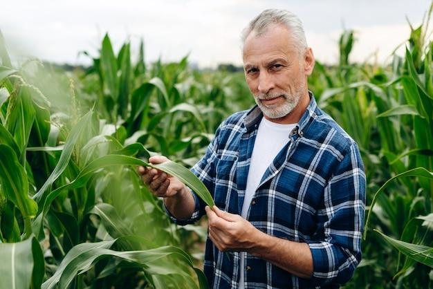 Агроном, стоящий на кукурузном поле, проверяет урожай кукурузы